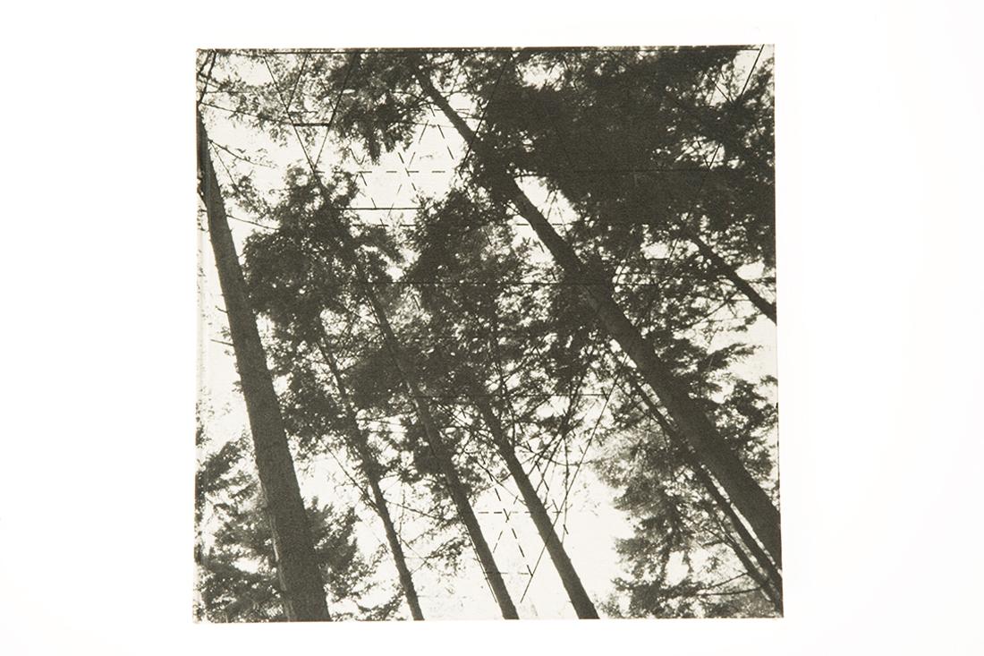 Bosboek-Foto-0